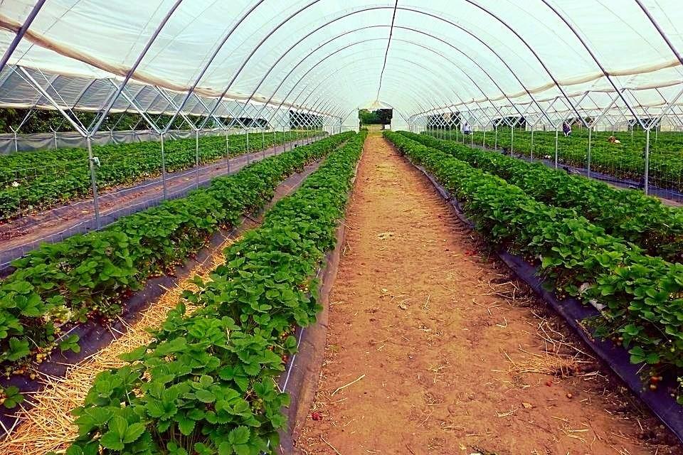 Serre photovoltaique gratuite à Bordeaux - Construction de bâtiments photovoltaïques agricoles ...